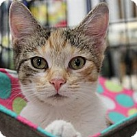 Adopt A Pet :: Queenie - Santa Monica, CA