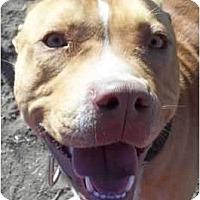 Adopt A Pet :: Diesel - Arenas Valley, NM