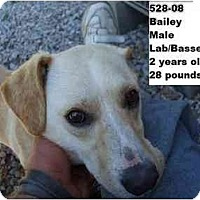 Adopt A Pet :: Bailey - RESCUED! - Zanesville, OH