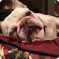 Adopt A Pet :: Gaspar the Frenchy - Freeport, NY