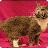Adopt A Pet :: Hector - Sacramento, CA