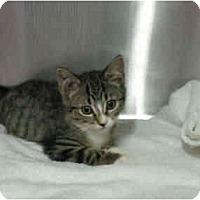 Adopt A Pet :: Nolan - Mission, BC
