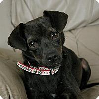 Adopt A Pet :: Dee - Sacramento, CA
