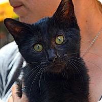 Adopt A Pet :: Hannah - Brooklyn, NY