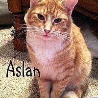 Adopt A Pet :: Aslan - Wichita Falls, TX