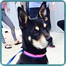 Adopt A Pet :: BRIDGETTE