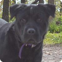 Adopt A Pet :: Mickey in MO - pending - Mira Loma, CA