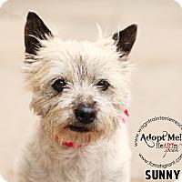 Adopt A Pet :: Sunny-Pending Adoption - Omaha, NE