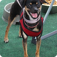 Adopt A Pet :: Beanie - Yuba City, CA