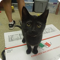 Adopt A Pet :: Azalea - Medina, OH