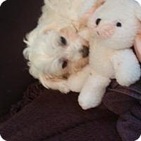 Adopt A Pet :: Margie - Alpharetta, GA