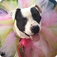 Adopt A Pet :: Valentine - Dearborn, MI