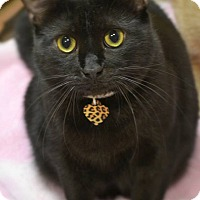 Adopt A Pet :: Jacqui - Byron Center, MI