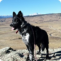 Adopt A Pet :: Dillon - Denver, CO