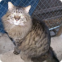 Adopt A Pet :: Caesar - Alamo, CA