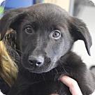 Adopt A Pet :: Baby Edgar