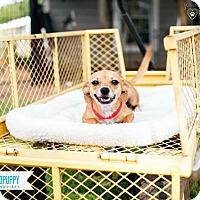 Adopt A Pet :: Rosie - Barnesville, GA