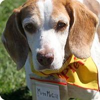 Adopt A Pet :: Miss McGill - Tampa, FL