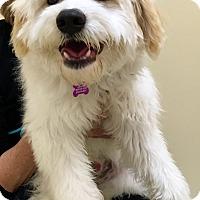 Adopt A Pet :: Perkins - Thousand Oaks, CA