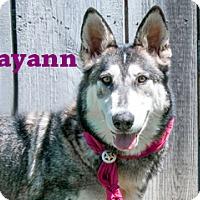 Adopt A Pet :: Mayann - Hamilton, MT
