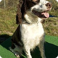 Adopt A Pet :: Trigger - Potsdam, NY