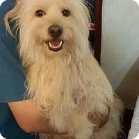 Adopt A Pet :: 'PEACHES' - Agoura Hills, CA
