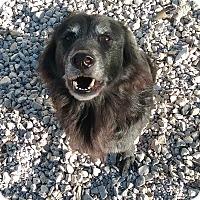 Adopt A Pet :: Stormy - Minneapolis, MN