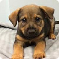 Adopt A Pet :: Sky - Weston, FL
