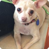 Adopt A Pet :: Nala - Oak Ridge, NJ