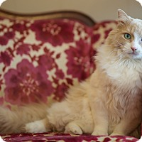 Adopt A Pet :: Simba - Boise, ID