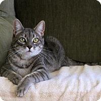 Adopt A Pet :: Finn - Gaithersburg, MD