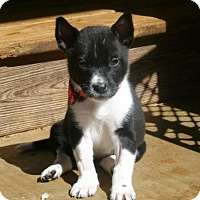 Adopt A Pet :: Biana - Holly Springs, NC