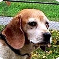 Adopt A Pet :: Ava - Cape Girardeau, MO