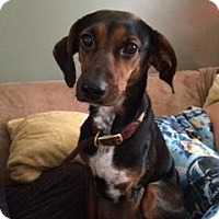 Adopt A Pet :: Maggie - Saskatoon, SK