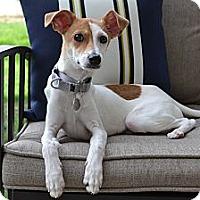 Adopt A Pet :: Sherlock - Los Angeles, CA