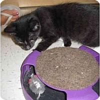 Adopt A Pet :: Peter - Jenkintown, PA