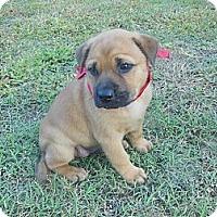 Adopt A Pet :: Della - New Boston, NH