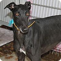 Adopt A Pet :: Owen - Philadelphia, PA
