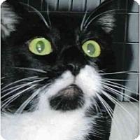 Adopt A Pet :: Nugget - Brea, CA
