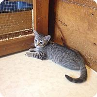 Adopt A Pet :: Mimi - Lancaster, MA