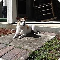 Adopt A Pet :: Cosita - Jupiter, FL