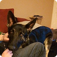 Adopt A Pet :: Izzy - Keller, TX