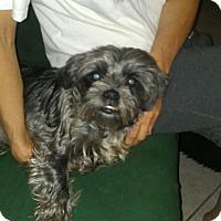 Adopt A Pet :: Cosmo - Phoenix, AZ