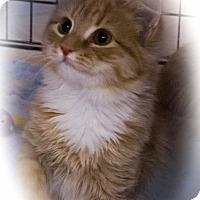Adopt A Pet :: Pollie - Stafford, VA