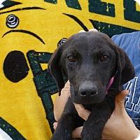 Adopt A Pet :: Sinny - Oviedo, FL