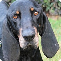 Adopt A Pet :: Ludwig - Atlanta, GA
