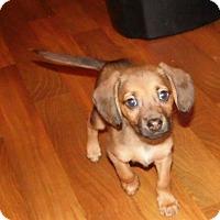 Adopt A Pet :: Derk - mooresville, IN