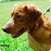 Adopt A Pet :: Donny - Daleville, AL
