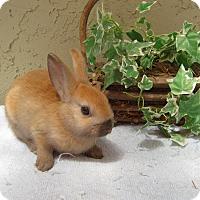 Adopt A Pet :: Tova - Bonita, CA