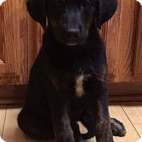 Adopt A Pet :: Macy - Newark, DE
